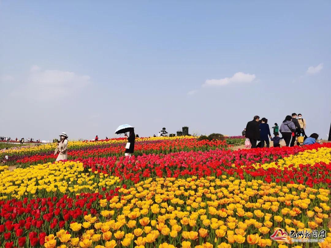门票免费送!巴山花海首届郁金香旅游季3月6日盛大开启~