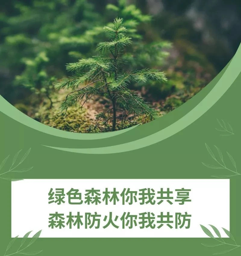 纳入考评!四川公职人员要带头落实森林草原防灭火要求