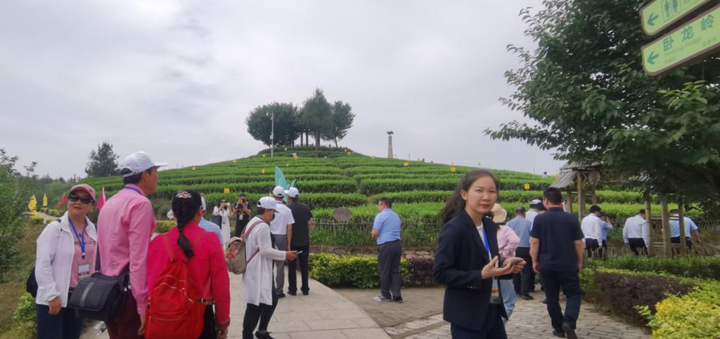 推进三区同建,巴中争取到2025年建成10个茶叶产业主题公园