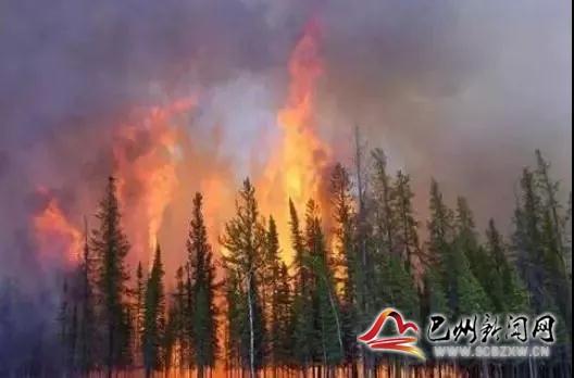 巴州区2021年1月—2月违规野外用火  火情处置情况
