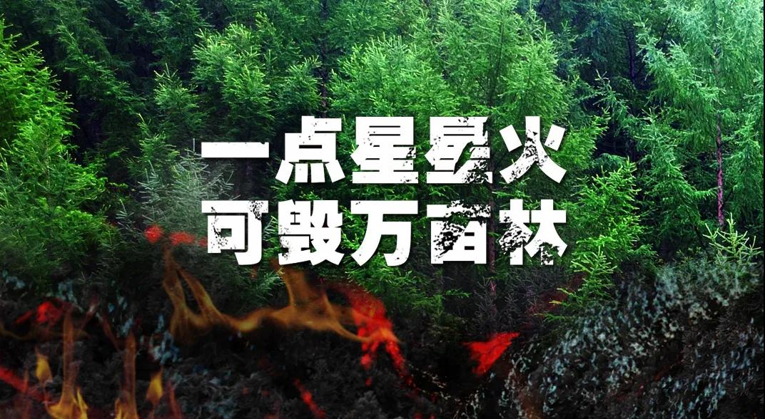 关于森林防火,这些你应该牢记